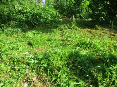 200720奥の栗の木周りの草刈り