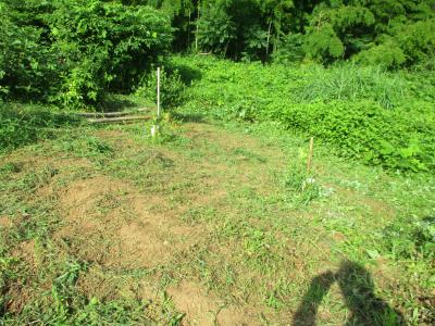 200720南側法面の草刈り