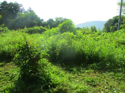 200720畑奥の草刈り