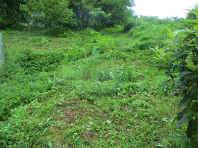 200730耕作放棄地との境界付近草刈り