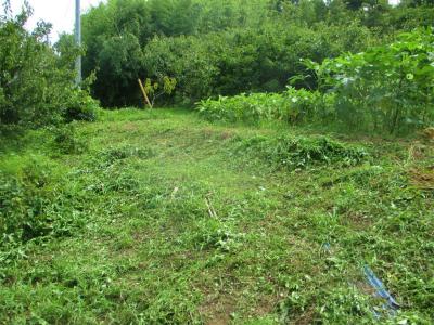 200803法面北側の草刈