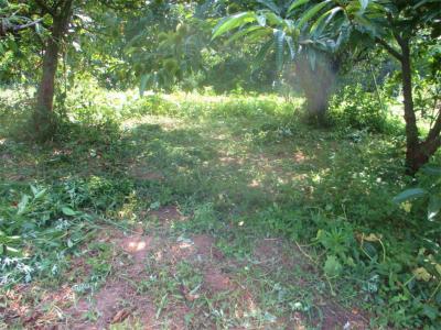 200805木の下も草刈り