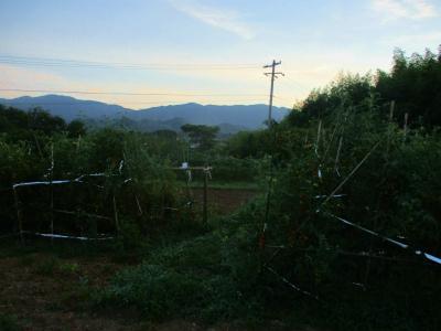 200817早朝の畑1