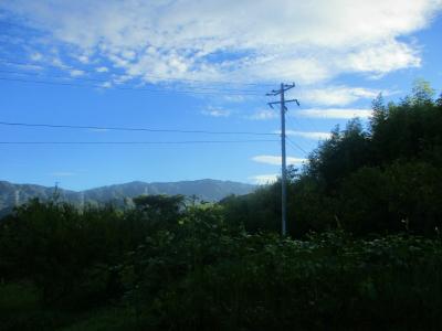 200828朝の畑1