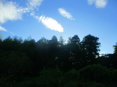 200828朝の畑2