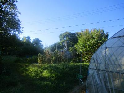 200828朝の畑4