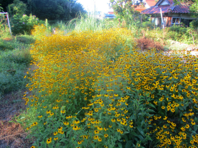 200828空き地の花1