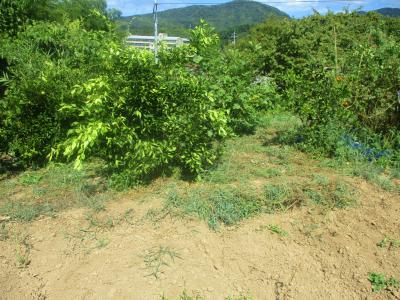 200902果樹周りの草刈り