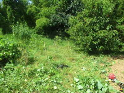 200902畑奥の草刈り
