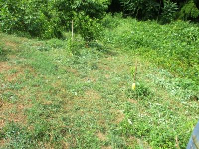 200902法面の草刈り