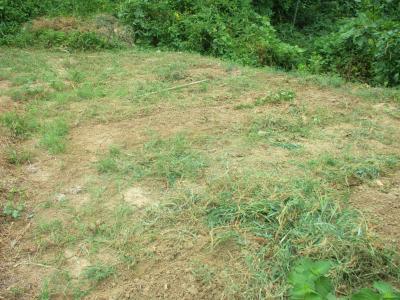 200904マルチはぎと草刈り