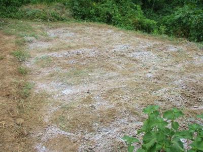 200904軽く耕運と石灰置き