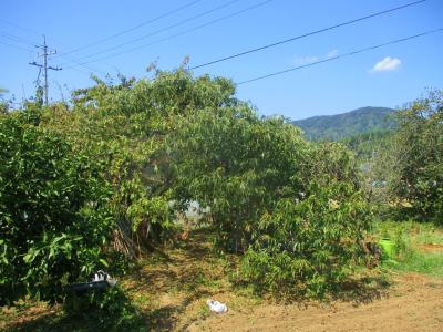 200908台風の後6