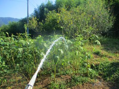 200908放水2