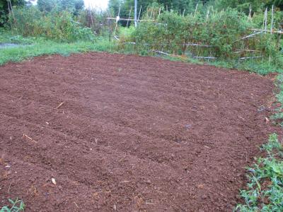 200912雨後の畑3