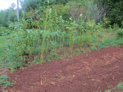 200912雨後の畑4