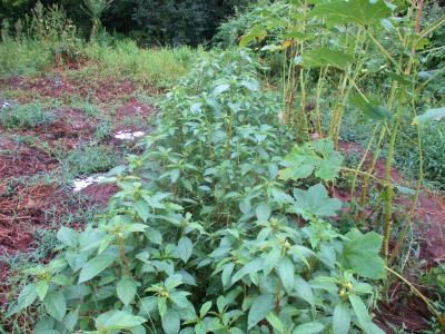 200912雨後の畑5