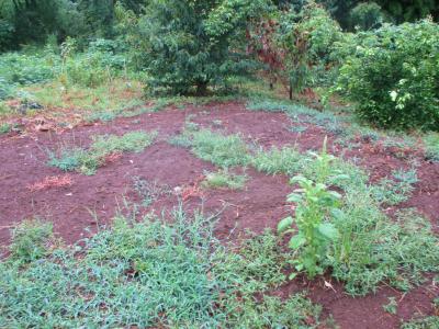 200912雨後の畑7