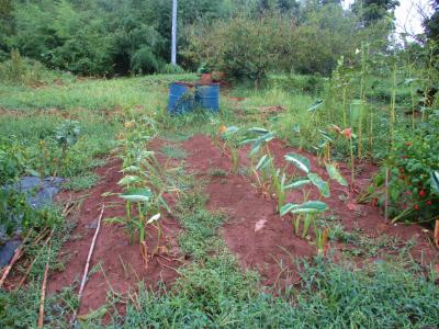 200912雨後の畑は2