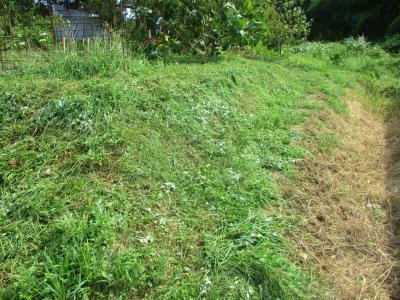 200919草刈り2