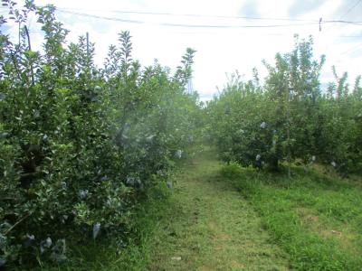 200921リンゴ畑