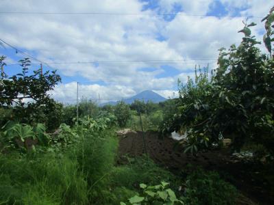 200921リンゴ畑から望む大山