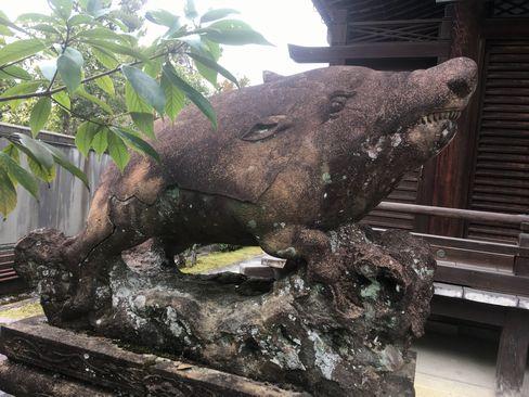 南禅寺・聴松院の狛猪(吽形)_H31.02.10撮影