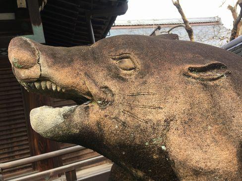 南禅寺・聴松院の狛猪__R01.12.27撮影