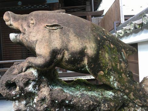 南禅寺・聴松院の狛猪(阿形)_R01.12.27撮影