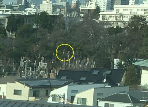新幹線から見た養玉院如来寺の墓地・但称の墓_R02.01.14撮影