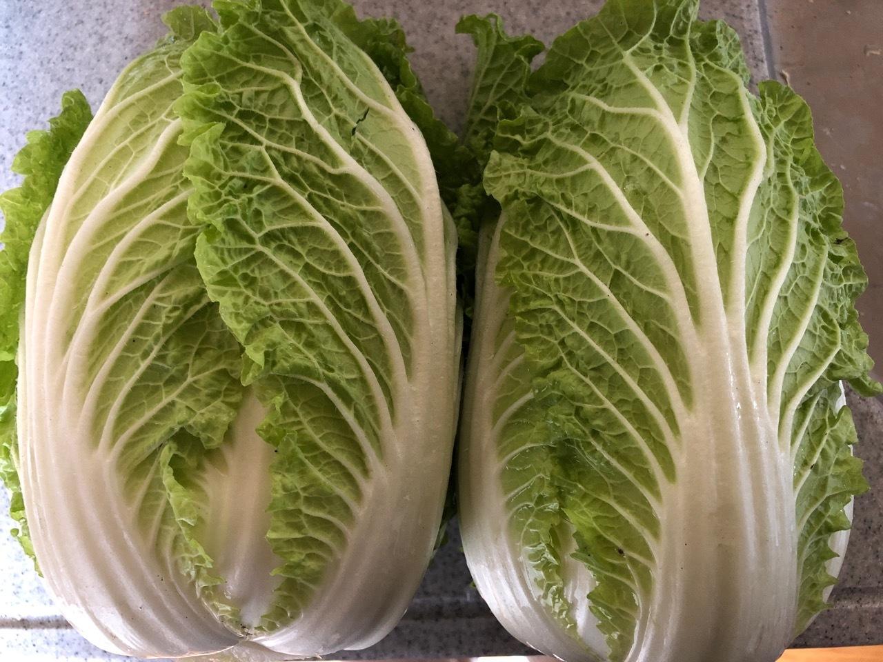 2020-1-25-1 ミニ白菜