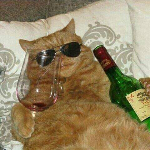 慣性の法則に 思いをめぐらす 猫