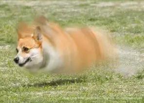 回転しながら 走る犬