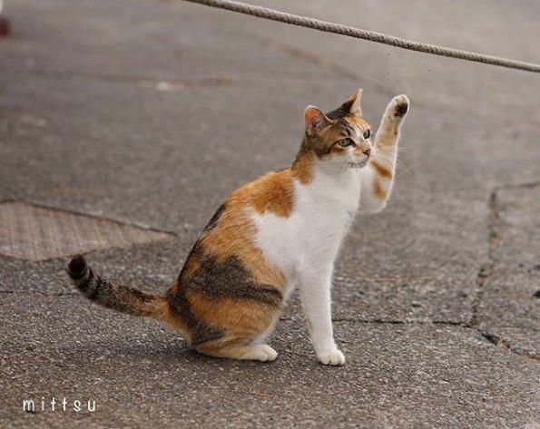 タクシーを止める猫