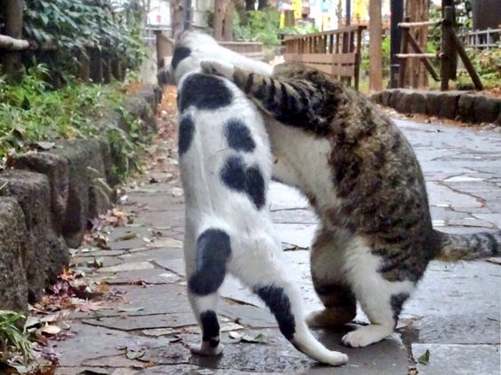 猫の小林寺拳法
