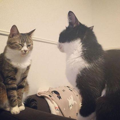 旦那と奉公猫の会話