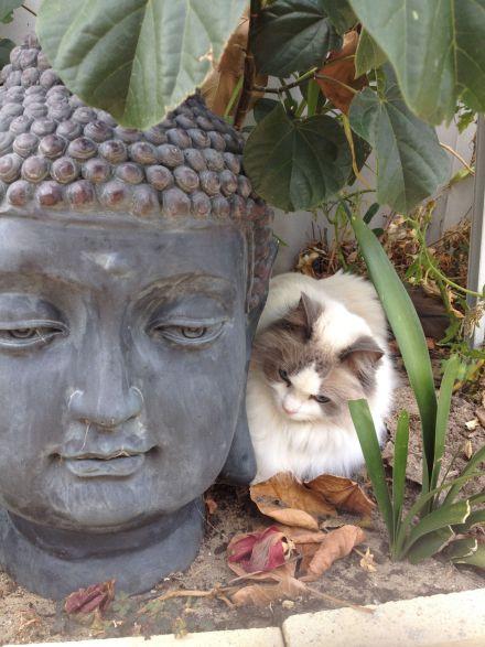 お釈迦様と猫