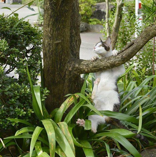 ハイペリオンを 眺める猫