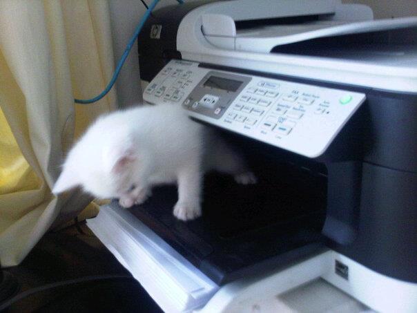 間違ってFAXされてきた 猫