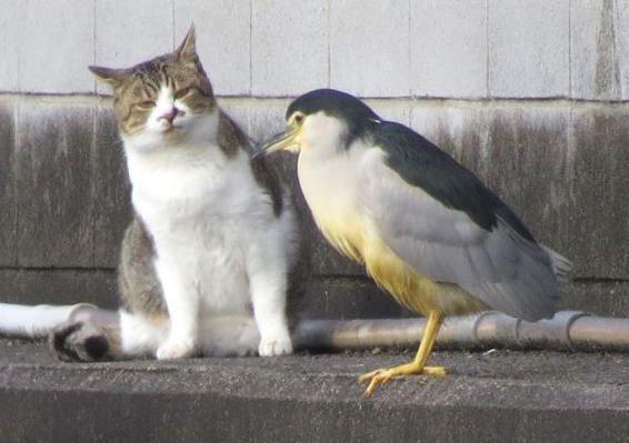 猫と鳥の会話