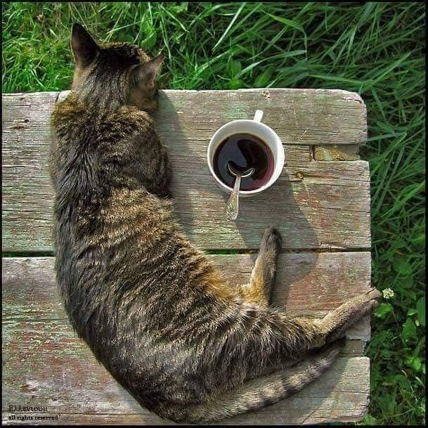 コーヒーと猫