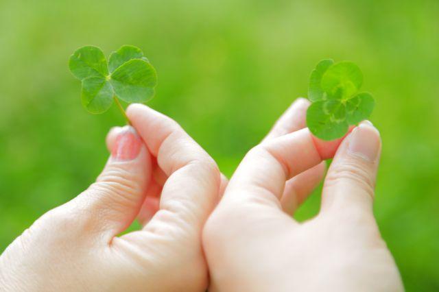 四つ葉のクローバーは、何故幸運の象徴とされる?