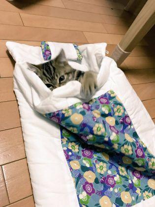 ふとんで 寝る 猫