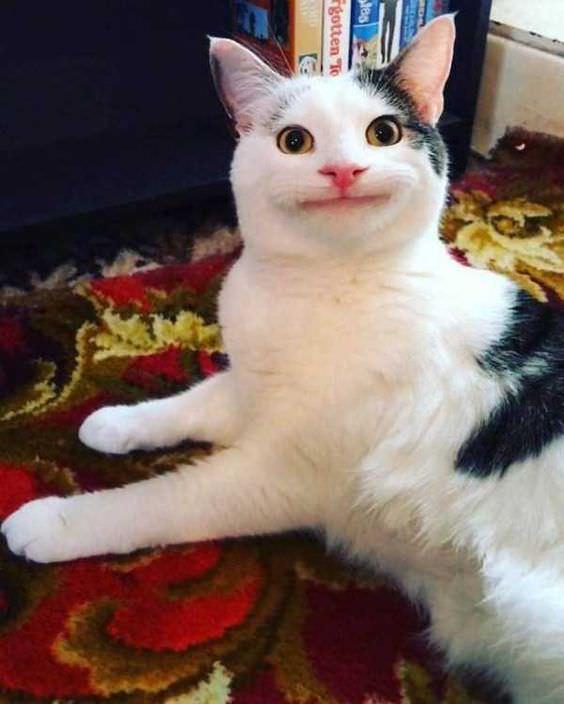 表情を隠す 猫