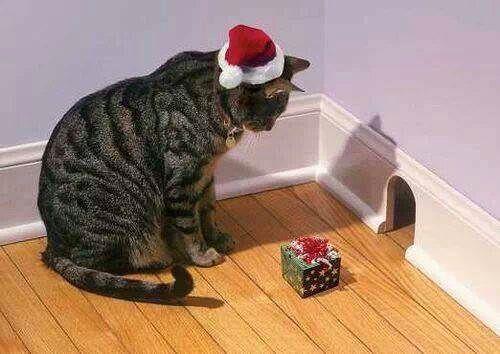 ネズミに クリスマスプレゼントを 贈る 優しいネコ