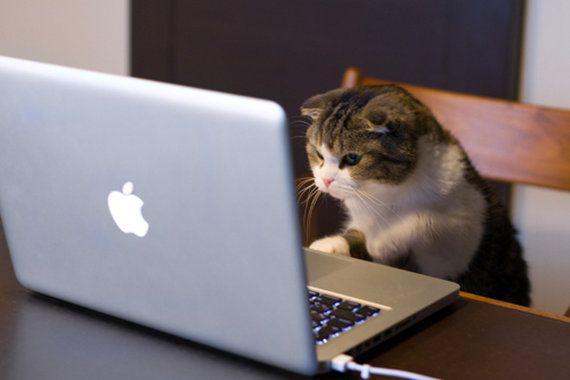 猫缶を注文する猫