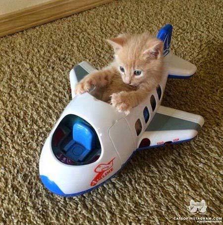 飛行機を操縦する 猫