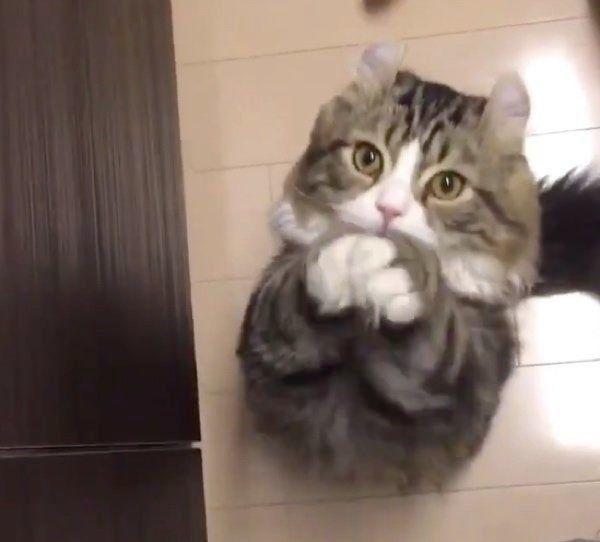 魚をもっとちょうだいと ねだる猫