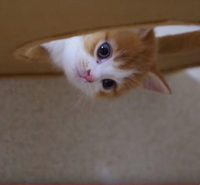 ズッキーニを 欲しがる 猫