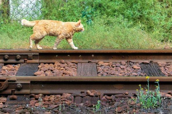 線路を検証する猫